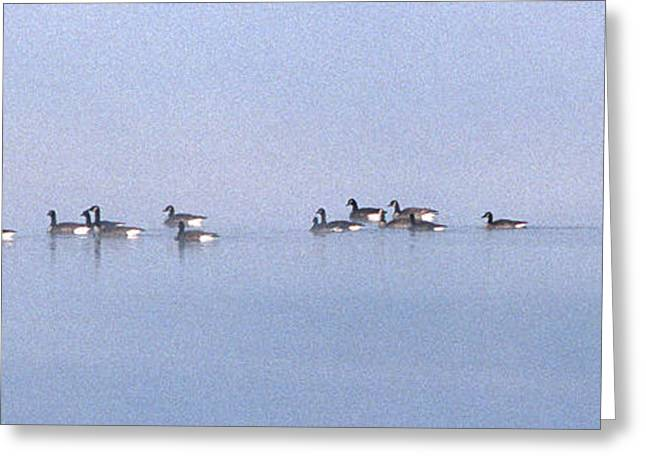 Photos Of Birds Greeting Cards - A Band Of Geese Greeting Card by Skip Willits