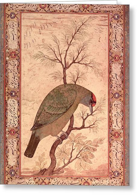 A Barbet Himalayan Blue-throated Bird Jahangir Period, Mughal, 1615 Greeting Card by Mansur