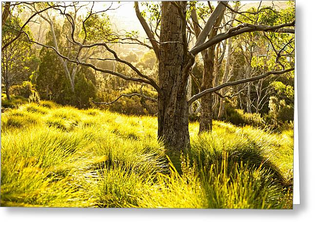 Golden Summer Grass Greeting Cards - A Bare Tree Greeting Card by Ulrich Schade