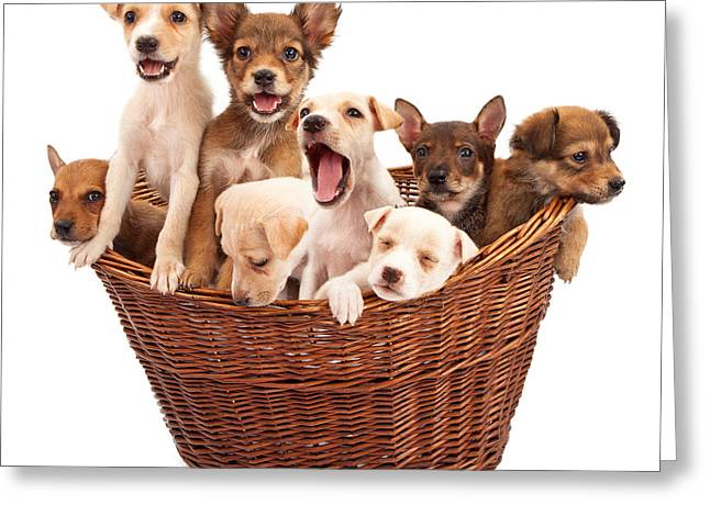 A Basket Of Puppies  Greeting Card by Susan  Schmitz