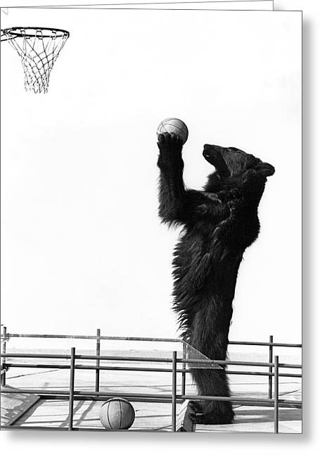 A Basketball Bear Greeting Card by Underwood Archives