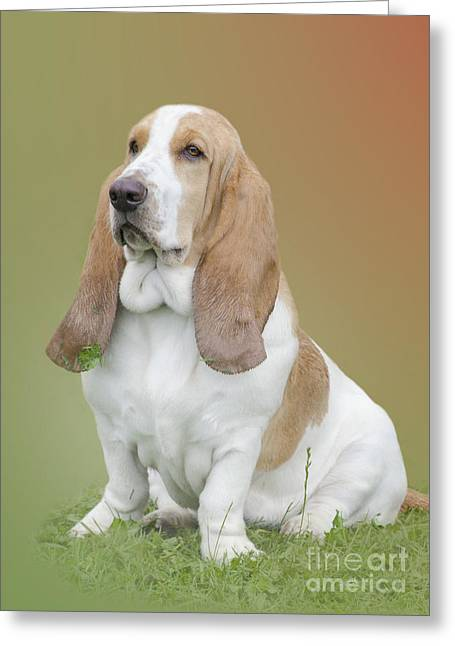 Full-length Portrait Greeting Cards - A Basset Hound Portrait Greeting Card by Linsey Williams