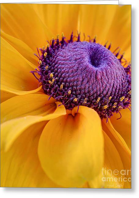 Yellow Sunflower Greeting Cards - A Beautiful Black Eye Greeting Card by Heidi Smith