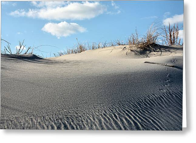 Animal Tracks Greeting Cards - A beautiful Day Greeting Card by JC Findley