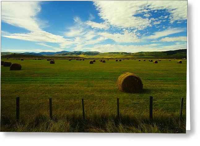 Hay Bales Greeting Cards - A beautiful harvest. Greeting Card by Jeff  Swan