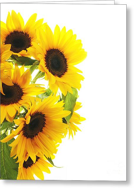 Austin Pyrography Greeting Cards - A Beautiful Sunflower Greeting Card by Boon Mee