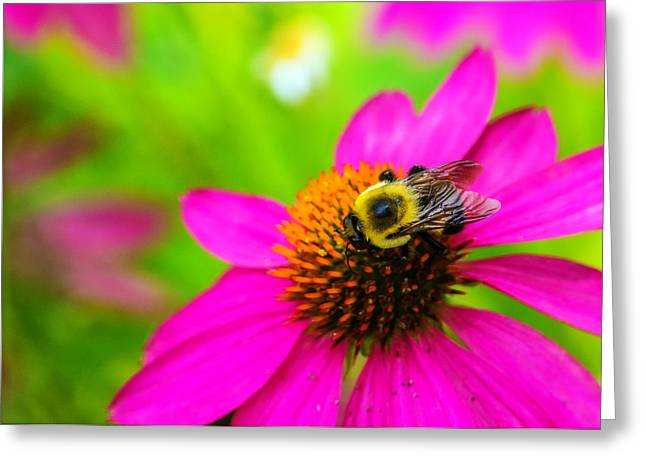 Bumble Greeting Cards - A Bee and Reverie Greeting Card by Jon Woodhams