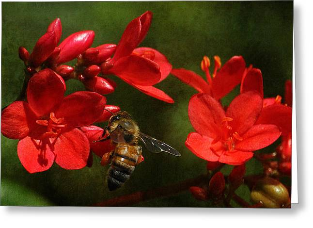 Gathering Greeting Cards - A Bees Life Greeting Card by HH Photography of Florida