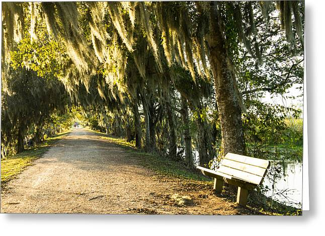 A Bench Under Golden Spanish Moss Greeting Card by Ellie Teramoto