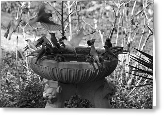 A Bevy Of Birds In Black And White Greeting Card by Suzanne Gaff