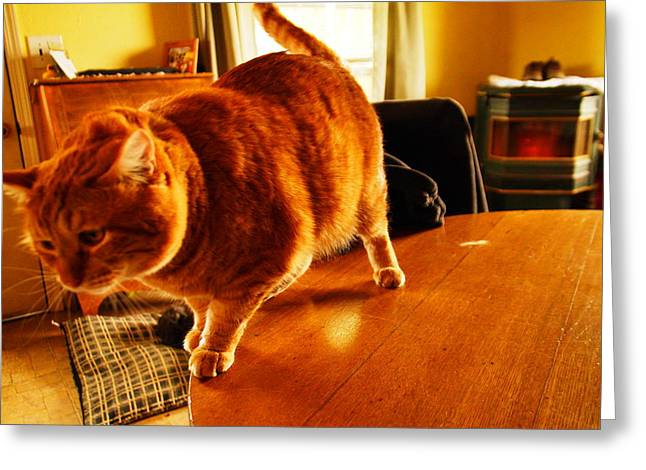 Tom Cat Greeting Cards - A Big Fat Tabby Greeting Card by Jeff  Swan