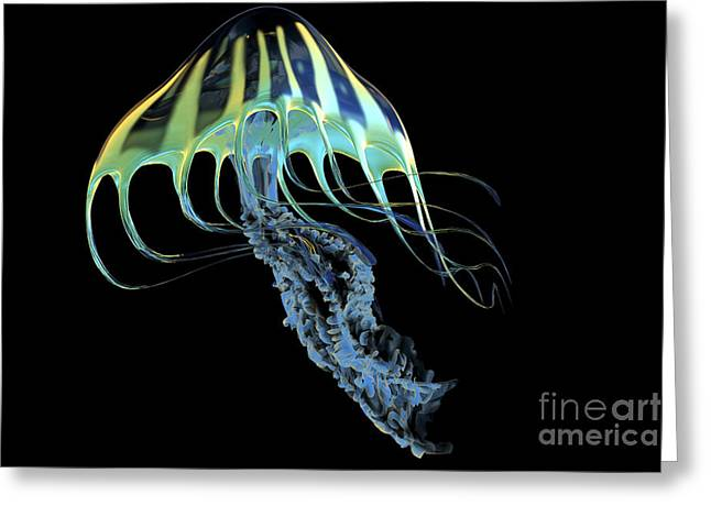 A Bioluminescent Jellyfish Greeting Card by Corey Ford