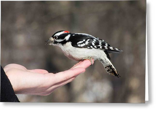 A Bird In The Hand Greeting Card by Cheryl Cencich