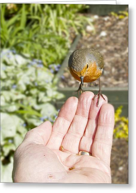 Looking For Love Greeting Cards - A Bird in the Hand Greeting Card by Robert Murray