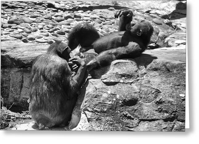 Chimpanzee Greeting Cards - A Bit Like Us V2 Greeting Card by Douglas Barnard