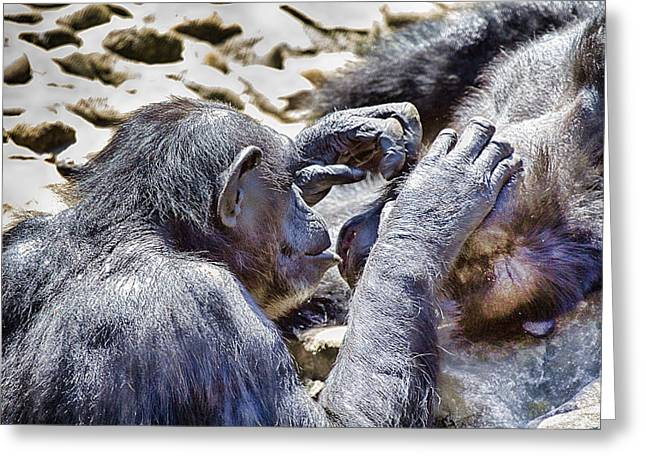 Chimpanzee Greeting Cards - A Bit Like Us V4 Greeting Card by Douglas Barnard