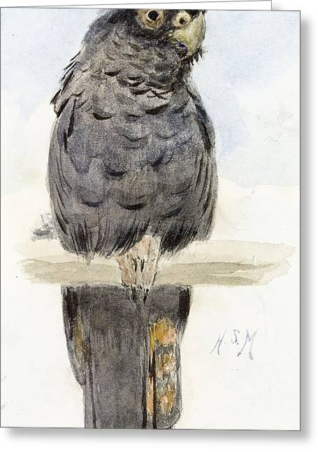 Wild Parrots Greeting Cards - A Black Cockatoo Greeting Card by Henry Stacey Marks