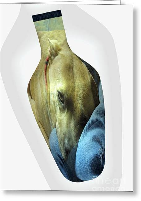 Apbt Greeting Cards - A Bottle of Love Greeting Card by Renee Trenholm