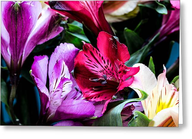Collecting Flower Bouquets Greeting Cards - A Bouquet of Peruvian Lilies Greeting Card by Donna Lee