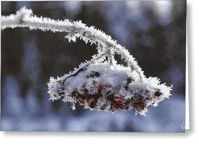 Inflorescence Greeting Cards - A bow for Mr Frost Greeting Card by Gun Legler