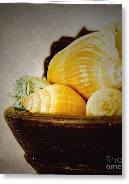 Shell Of A House Greeting Cards - A Bowl of Shells Greeting Card by MaryJane Armstrong