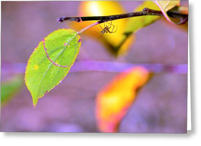 Spider Rock Art Greeting Cards - A branch with leaves Greeting Card by Toppart Sweden