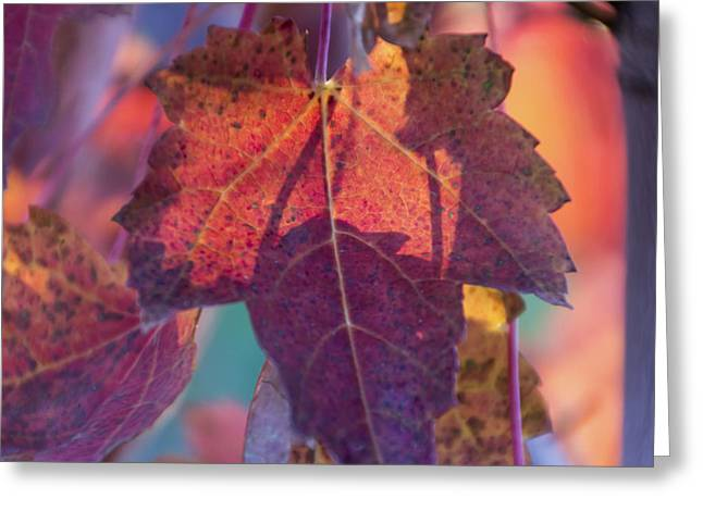 A Breath Of Autumn Greeting Card by Dana Moyer