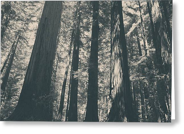 Black And White Nature Landscapes Greeting Cards - A Breath of Fresh Air Greeting Card by Laurie Search