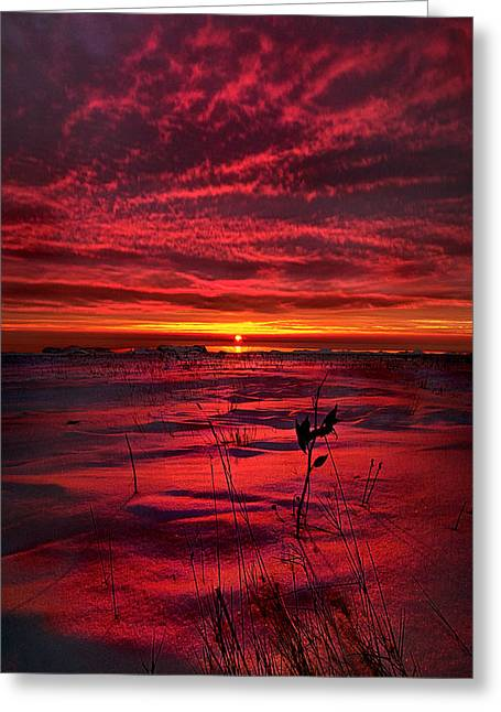 Red Leaves Greeting Cards - A Breathless Kiss Greeting Card by Phil Koch