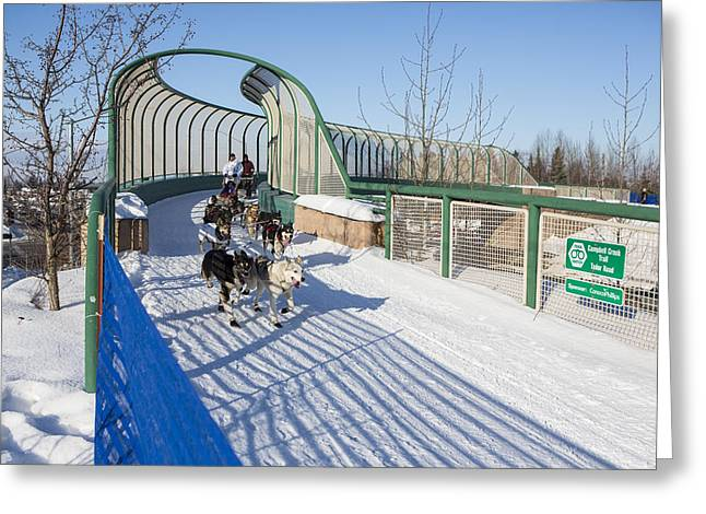 Dog Sled Greeting Cards - A Bridge in the Iditarod  Greeting Card by Tim Grams