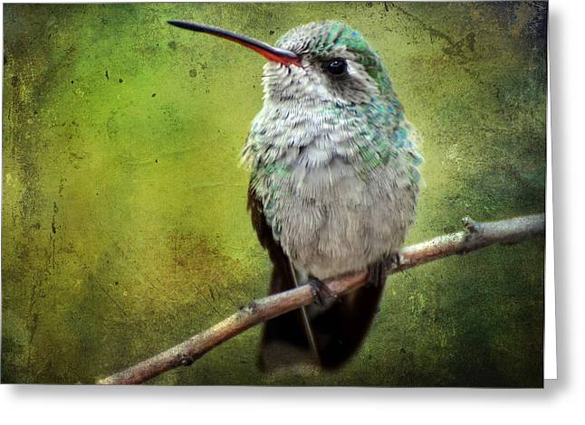 A Broad-billed Hummer Greeting Card by Barbara Manis