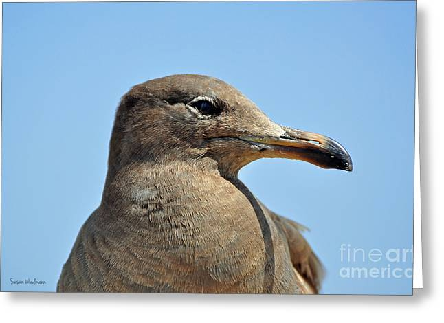 Susan Wiedmann Greeting Cards - A Brown Gull in Profile Greeting Card by Susan Wiedmann