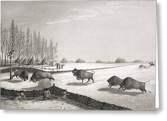 Fence Drawings Greeting Cards - A Buffalo Pound Greeting Card by George Back