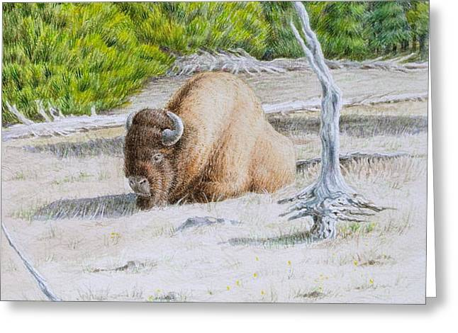 A Buffalo Sits in Yellowstone Greeting Card by Michele Myers