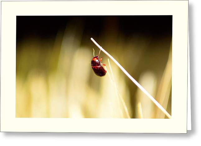 Reaping Greeting Cards - A bug on a wheat straw Greeting Card by Toppart Sweden