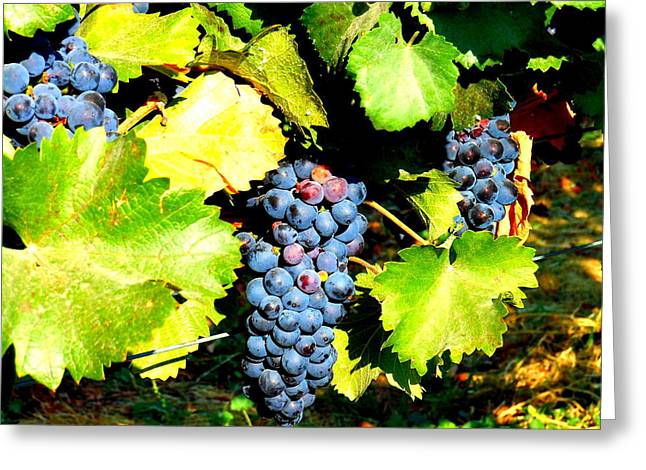 Wapato Photographs Greeting Cards - A Bunch of Grapes Greeting Card by Kay Gilley