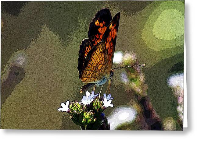 Soft Things Greeting Cards - A Butterflies View  Greeting Card by Kim Pate