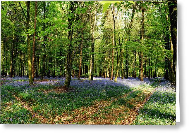 Woodland Scenes Greeting Cards - A Carpet Of Colour Greeting Card by Wendy Wilton