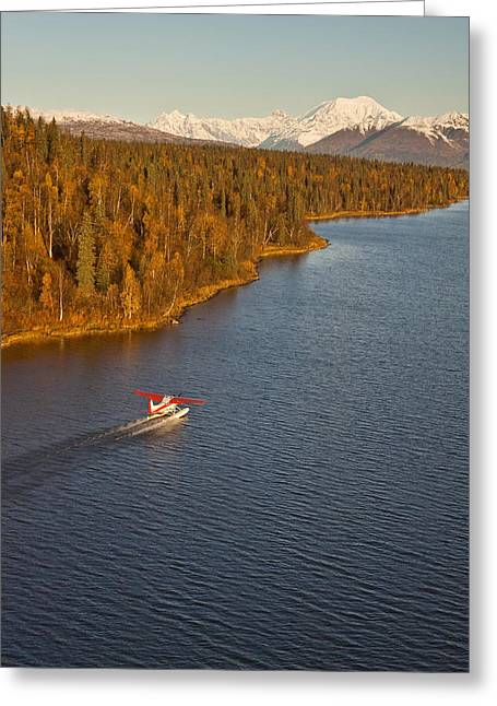 Floatplane Greeting Cards - A Cessna 185 Floatplane Lands On An Greeting Card by Jeff Schultz