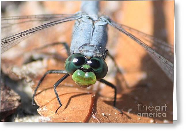 Dragonfly Macro Greeting Cards - A Cheery Hello Greeting Card by Carol Groenen