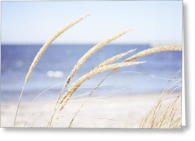 A Child Of The Summer Breeze Greeting Card by Carolyn Cochrane