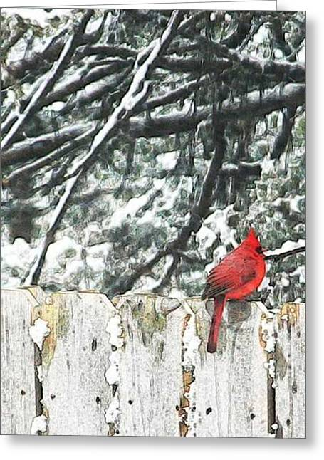 A Christmas Cardinal Greeting Card by PainterArtist FIN