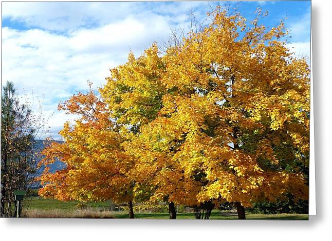 Chromatic Greeting Cards - A Chromatic Fall Day Greeting Card by Will Borden