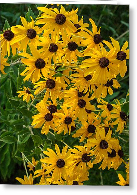 A Cluster Of Daisies 1 Greeting Card by Douglas Barnett
