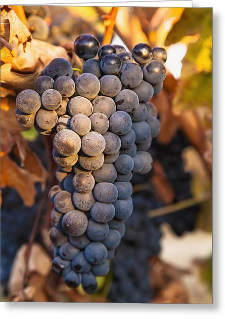 Rioja Greeting Cards - A Cluster Of Grapes On A Vinesan Greeting Card by Carlos Sanchez Pereyra