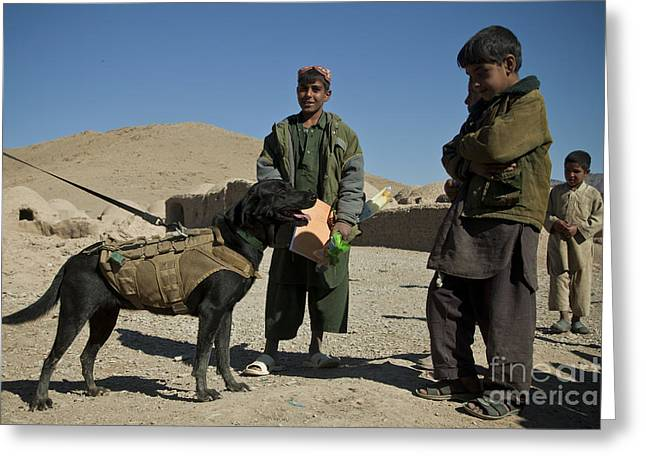 Working Dog Greeting Cards - A Coalition Forces Military Working Dog Greeting Card by Stocktrek Images