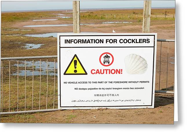 A Cockle Picking Sign Near Southport Greeting Card by Ashley Cooper