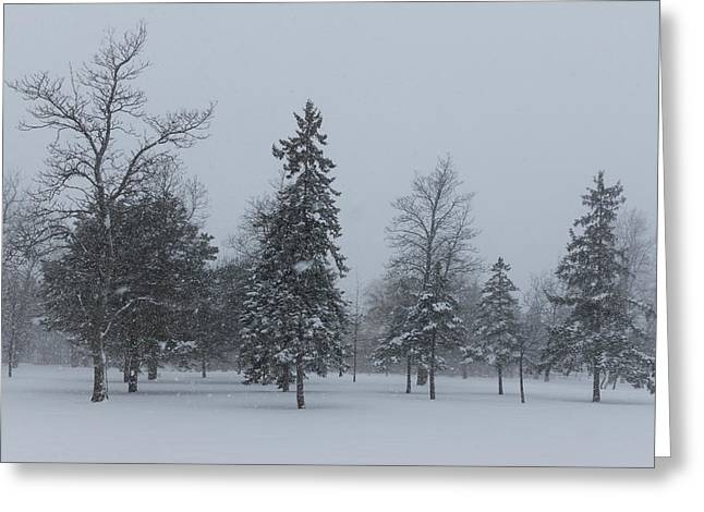 Winter Storm Greeting Cards - A Cold December Morning - Snowstorm in the Park Greeting Card by Georgia Mizuleva