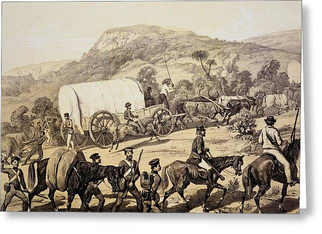Wagon Drawings Greeting Cards - A Convoy Of Wagons, From Scenes Greeting Card by English School