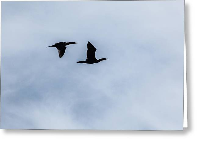 Two Crows Greeting Cards - A Couple of Cormorants Greeting Card by Karol  Livote